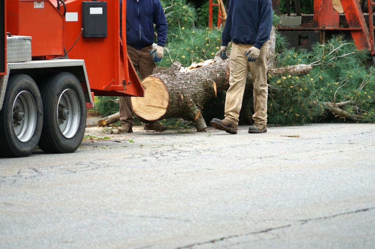remove tree